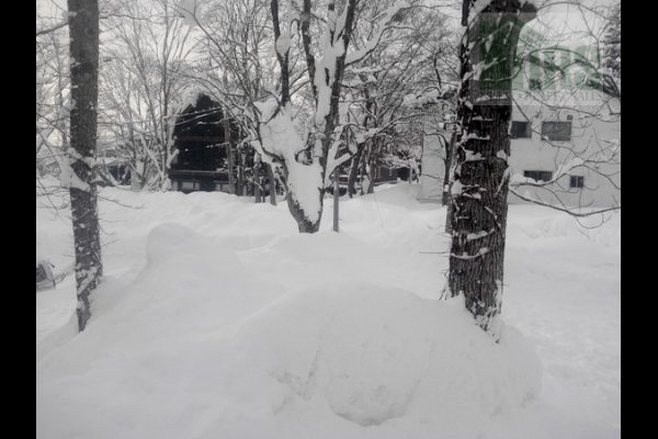 Niseko Hirafu Lower Village Land