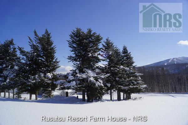 Looking south-east across block with home behind pine tree wind break. Rusutsu Ski Resort Mt Isola can be seen in the background.